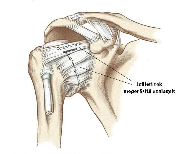 a csípő- és a vállízületek fájdalma okoz)