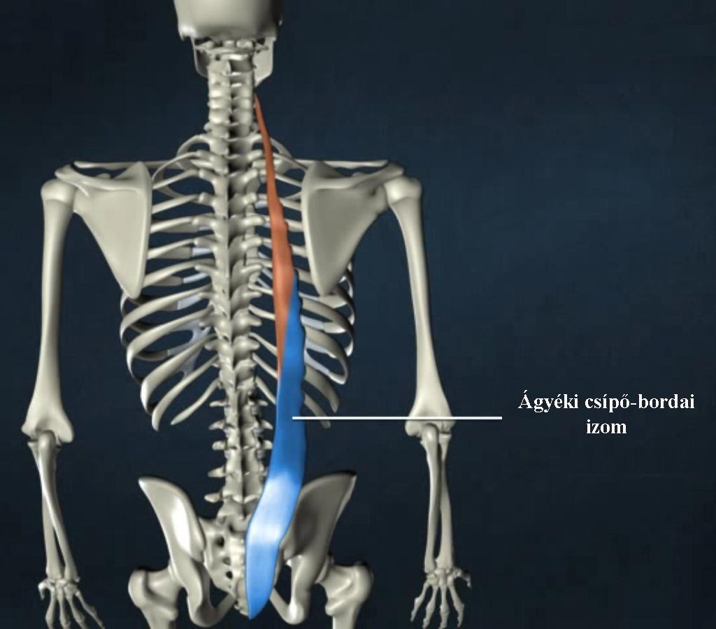 Az ágyéki gerinc betegségei és kezelése | Tájékoztatók